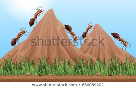 Molti formiche climbing up montagna illustrazione Foto d'archivio © bluering