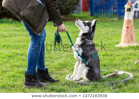 dogs in a training of obedience Stock photo © cynoclub