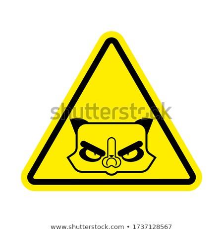 Atenção gato cautela animal de estimação amarelo triângulo Foto stock © popaukropa