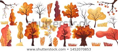 Stilizzato autunno impianti set vettore alberi Foto d'archivio © tracer
