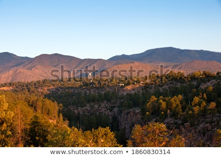 Sunrise in a New Mexico Pine Forest stock photo © Qingwa