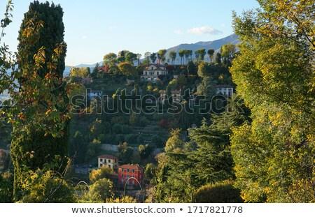 Verde ladera vina ciudad lago cielo Foto stock © Artlover