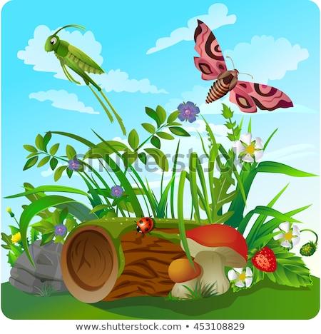 Leven insecten bos puzzel school Stockfoto © Olena