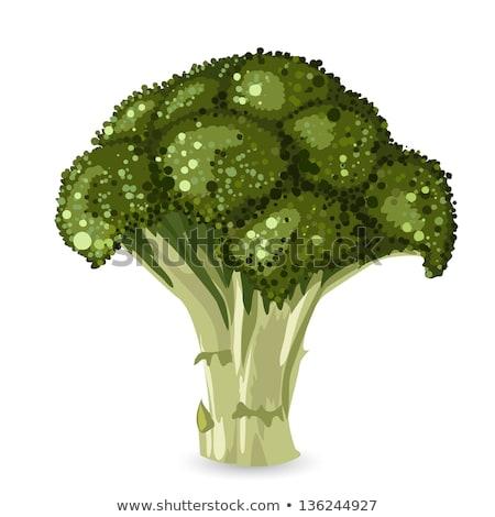 Vektör brokoli yalıtılmış beyaz simge ikon Stok fotoğraf © freesoulproduction