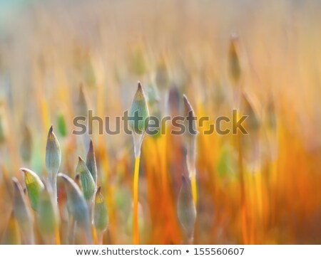 Foto stock: Abstract Nature Background Of Moss And Flowers