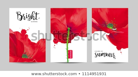 luxurious bright red vector poppy flowers paintings set on white stock photo © lisashu