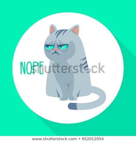 Ranzinza gato isolado zangado animal de estimação cara Foto stock © MaryValery