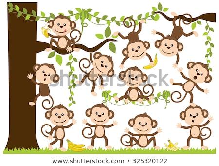 cute monkey Stock photo © watcartoon