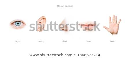 öt alapvető emberi látnivaló szag ízlés Stock fotó © ESSL