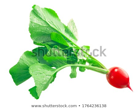 Radish Raphanus raphanistrum, paths Stock photo © maxsol7