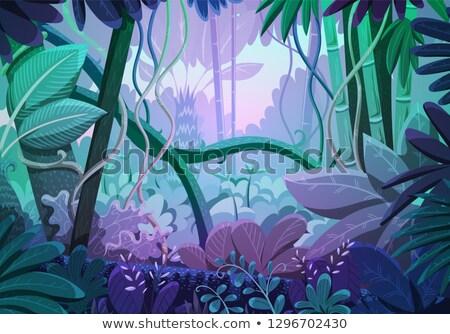 Esik az eső jelenet mély erdő illusztráció víz Stock fotó © colematt
