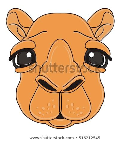 Triste desenho animado camelo ilustração olhando Foto stock © cthoman
