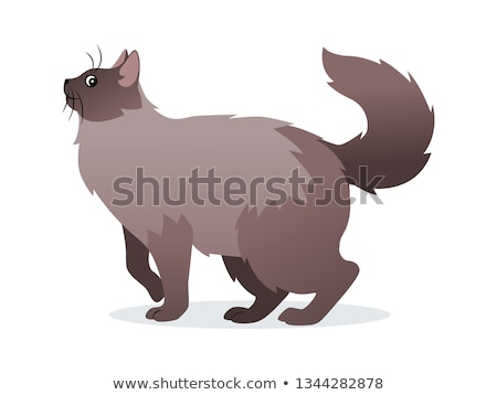 Long-haired cat with long fluffy tail icon, pet isolated on white background, domestic animal, vecto Stock photo © MarySan