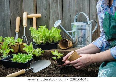 Plántulas soleado jardín mesa superior Foto stock © karandaev