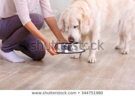 kutya · vakcina · állatorvos · injekciós · tű · kezek · orvos - stock fotó © kzenon