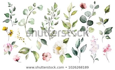set · acquerello · fiori · foglie · verdi · bianco - foto d'archivio © Artspace
