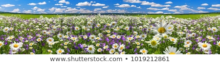 Flowered Landscape Stock photo © ajn