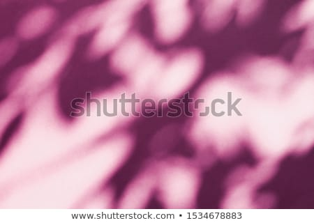 Abstract art, botanical shadows overlay on blush pink background Stock photo © Anneleven
