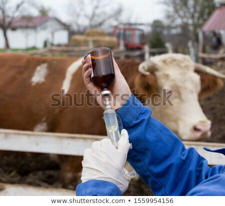 Veterinarian holding injection Stock photo © Kzenon