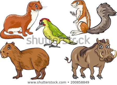 Eekhoorn cartoon karakter illustratie grappig Stockfoto © izakowski