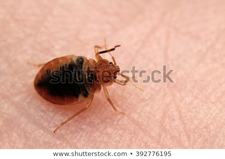 Bed Bug On Skin Stock photo © Lightsource