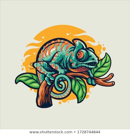Kameleon hagedis iconen heldere reptiel dieren Stockfoto © anbuch