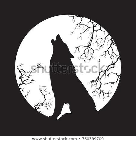 Farkas hold vadállat sziluett naplemente díszlet Stock fotó © barsrsind