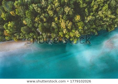 Campagna boschi incredibile alberi verde Foto d'archivio © Anneleven