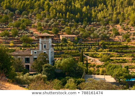 countryside in mallorca spain, olive tree and mountain Stock photo © godfer