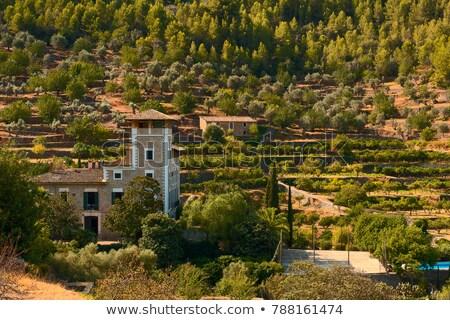Foto stock: Mallorca · Espanha · oliveira · montanha