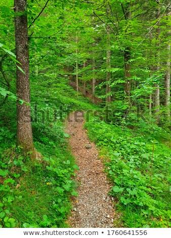 beech forest in fall 06 Stock photo © LianeM