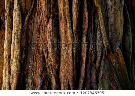 görmek · ağaç · havlama · duvar · doğa - stok fotoğraf © prill