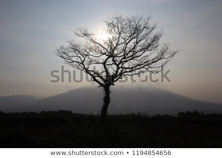 sillouette tree and sky Stock photo © sweetcrisis
