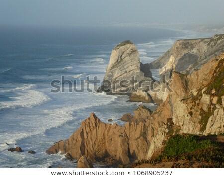wybrzeża · Europie · ocean · kwiaty · wody - zdjęcia stock © lianem