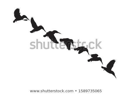 sziluett · jégmadár · háttér · madár · fekete · szabadság - stock fotó © perysty
