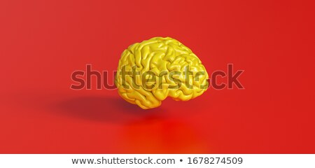 Brain model stock photo © shutswis