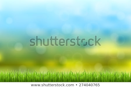 clouds and grass pattern stock photo © robertosch