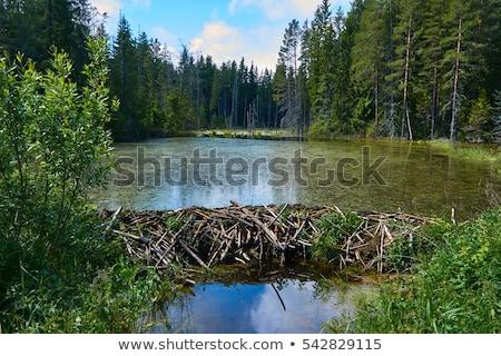 Kunduz su dere manzara mavi göl Stok fotoğraf © aetb