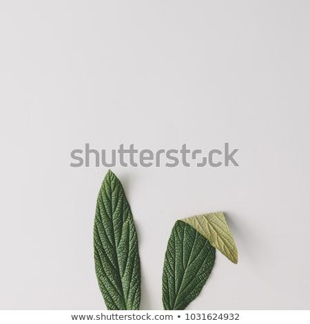 抽象的な イースターバニー イースター 春 草 自然 ストックフォト © rioillustrator