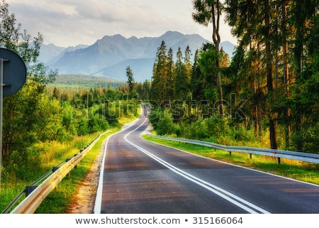 road leading through green spring forest stock photo © tainasohlman