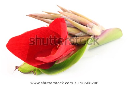 Kolaboti flower of Indian subcontinent Stock photo © bdspn