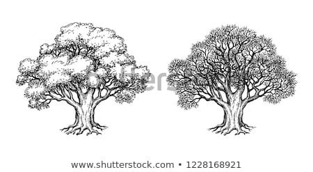 Korony dąb drzew jesienią Błękitne niebo niebo Zdjęcia stock © meinzahn