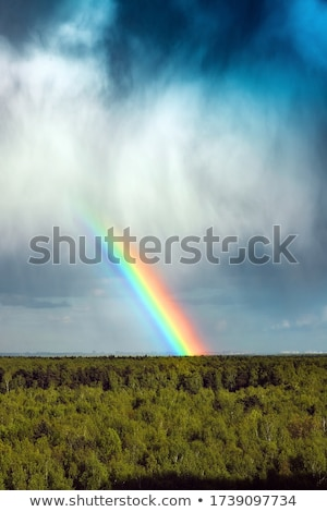 Colors of the rainbow after the rain  Stock photo © shihina