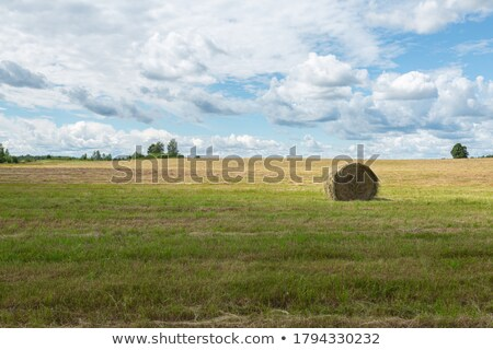 Heno aislado blanco agricultura granja Foto stock © Lightsource