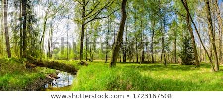 nieuwe · bos · stream · water · hout · bomen - stockfoto © rghenry