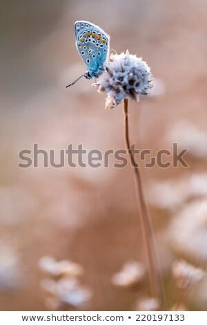 sereg · rózsaszín · pihen · tenger · nyárs · madár - stock fotó © smithore