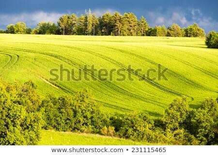 весны области дерево плато Франция пейзаж Сток-фото © phbcz