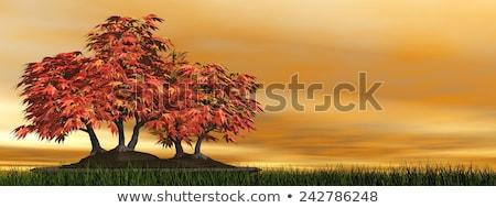 абрикос дерево бонсай 3d визуализации зеленая трава небе Сток-фото © Elenarts