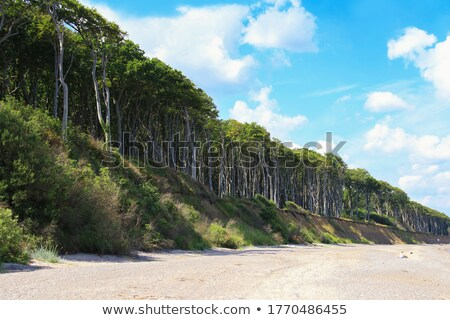 Ghost forest on the Baltic Sea Stock photo © w20er