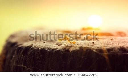 Dois formigas amor rocha Foto stock © ziprashantzi